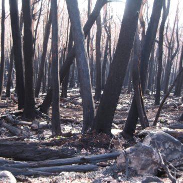 Australia Bushfire 2009